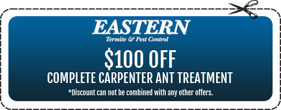 $100 off Complete Carpenter Ant Treatment in Monmouth County